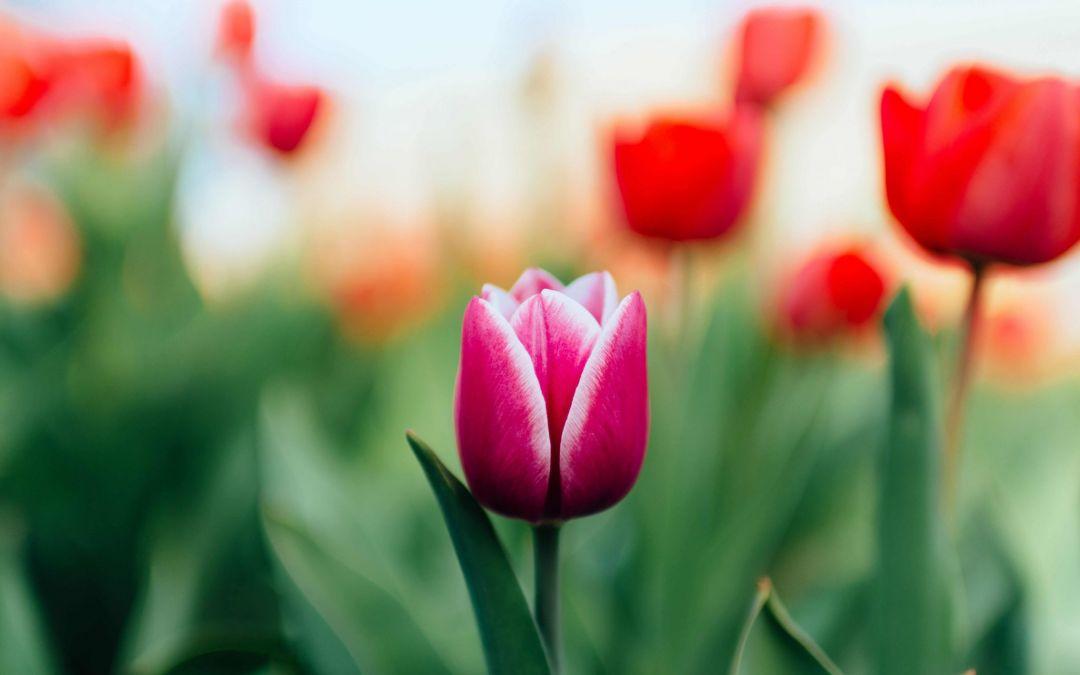 Startschuss für Dich! 7 Ideen um im Frühling in Bewegung zu kommen
