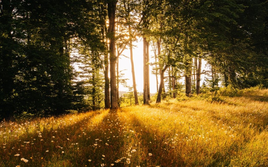 Anleitung zum Waldbaden! 9 Tipps für einen gelungenes Bad im Wald.